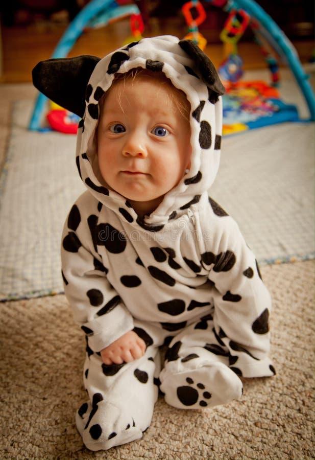 Bebê no traje Dalmatian fotos de stock royalty free