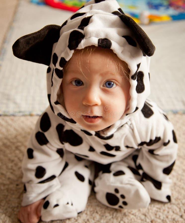Bebê no traje Dalmatian foto de stock