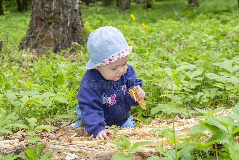 Bebê pequeno 9 meses que exploram a árvore podre, andando nas madeiras, escavações da criança da menina na serragem, retrato maci imagem de stock