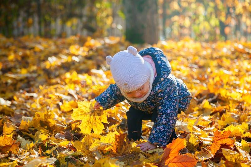 Bebê que pegara as folhas de bordo fotografia de stock royalty free