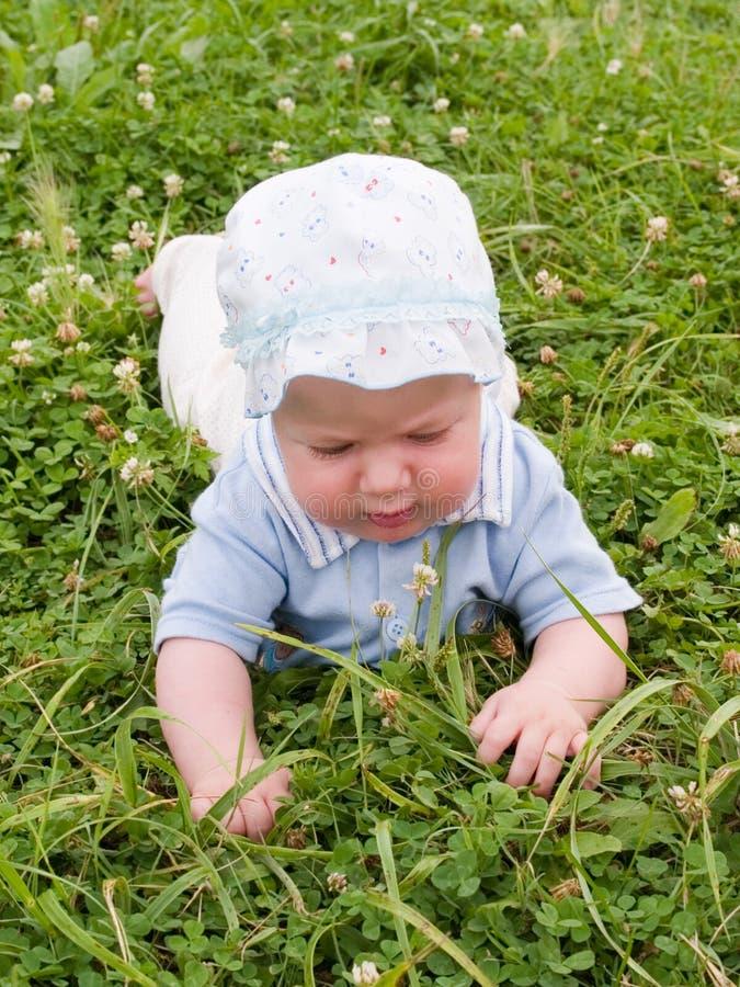 Bebê que rasteja no prado imagem de stock royalty free