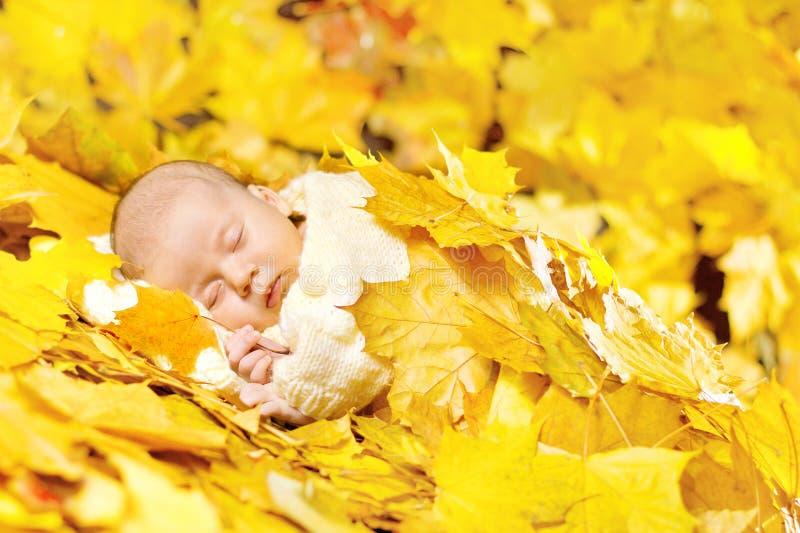 Bebê recém-nascido do outono que dorme nas folhas de plátano. fotos de stock