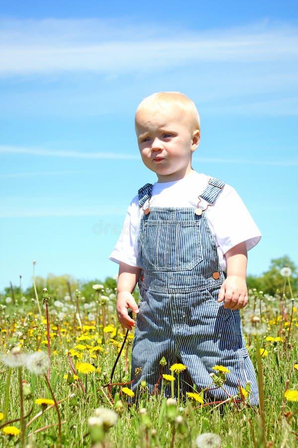 Bebê sério no campo fotografia de stock royalty free