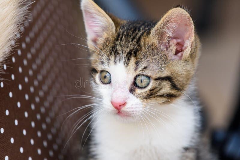 Bebê Tabby Cat In Basket fotografia de stock