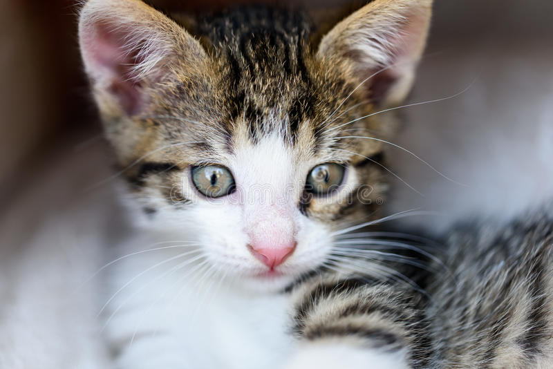 Bebê Tabby Cat In Basket imagem de stock