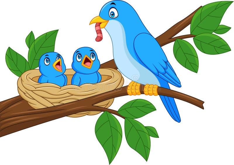 Bebês de alimentação do pássaro azul da mãe em um ninho ilustração royalty free