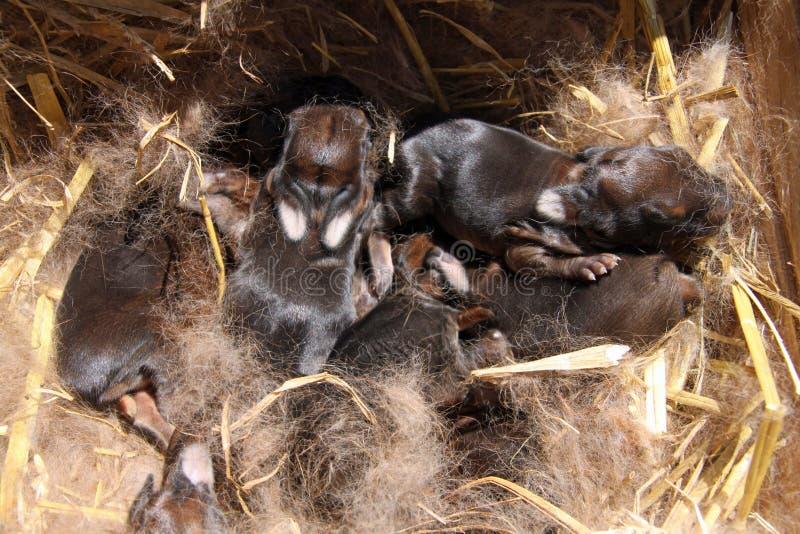 Bebês do coelho imagens de stock
