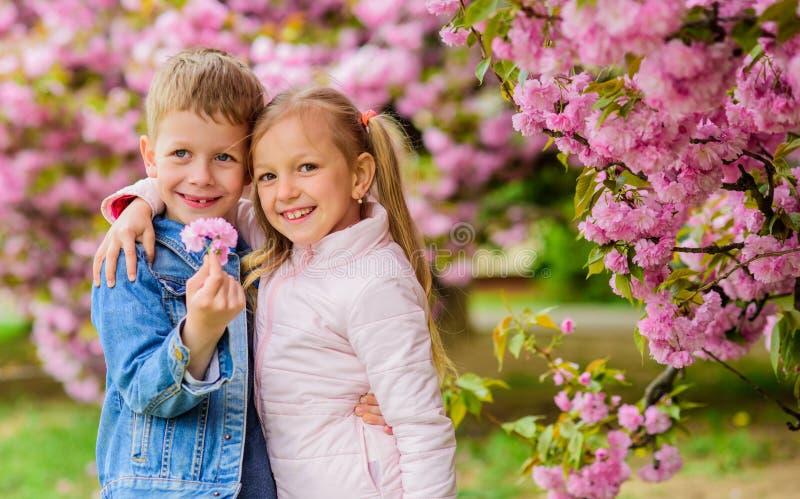Beb?s rom?nticos Crian?as que apreciam a flor de cerejeira cor-de-rosa Sentimentos macios do amor Acople crian?as em flores da ?r imagem de stock