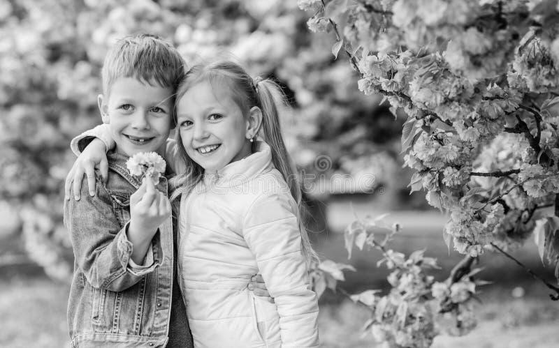 Beb?s rom?nticos Crian?as que apreciam a flor de cerejeira cor-de-rosa Sentimentos macios do amor Acople crian?as em flores da ?r fotografia de stock