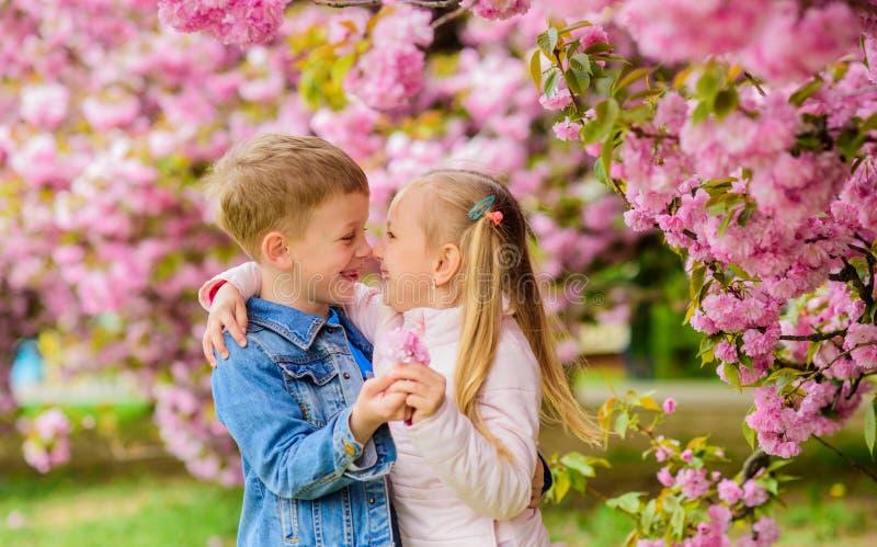 Beb?s rom?nticos Sentimentos macios do amor Acople crian?as em flores do fundo da ?rvore de sakura A menina aprecia a mola imagens de stock royalty free