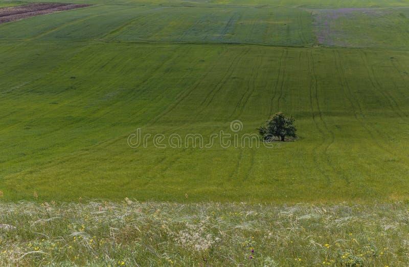 Bebaute Felder und ein einziger Baum stockfotos