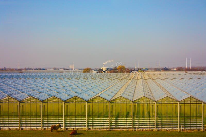 Bebautes Feld Land benutzt für landwirtschaftliche Produktion in den geometrischen Gewächshäusern vereinbart in vielen Reihen stockbilder