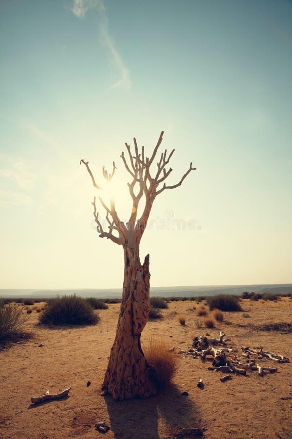 Beben Sie Baum lizenzfreie stockfotos