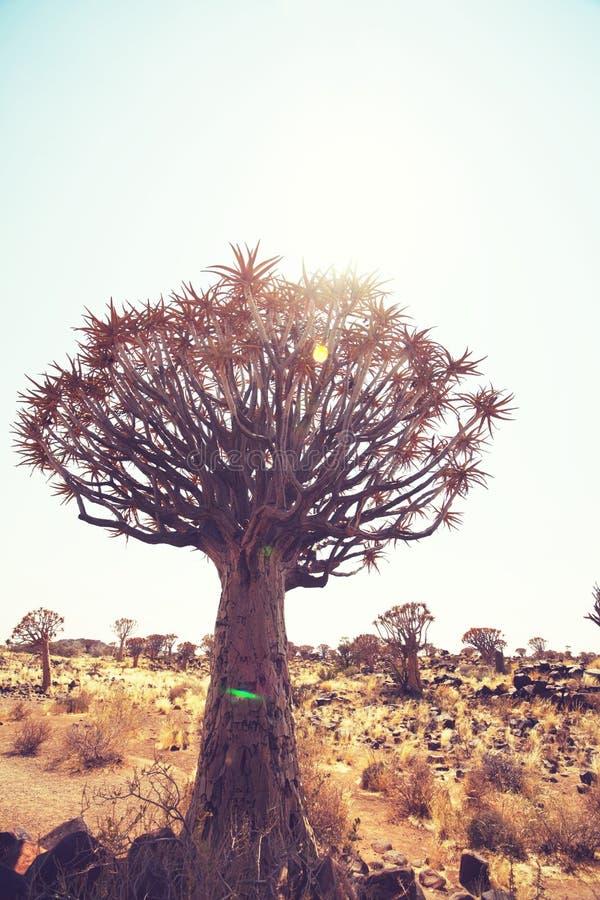 Beben Sie Baum lizenzfreies stockbild