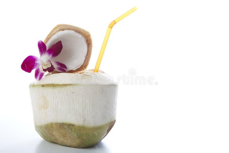 Bebida da água do coco imagens de stock royalty free