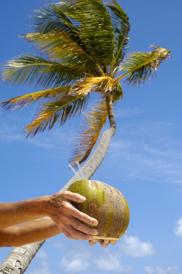 Bebida do coco foto de stock royalty free