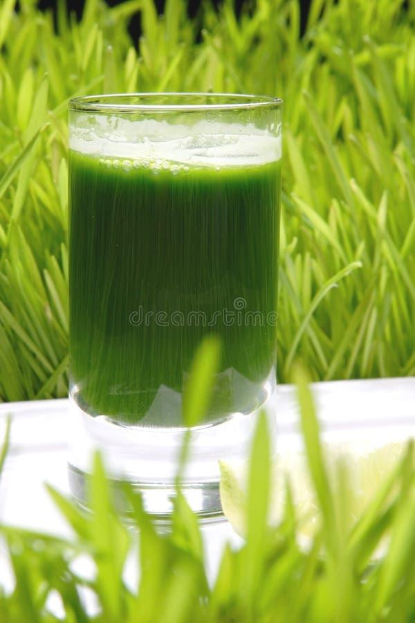 Bebida, trigo fresco imagem de stock