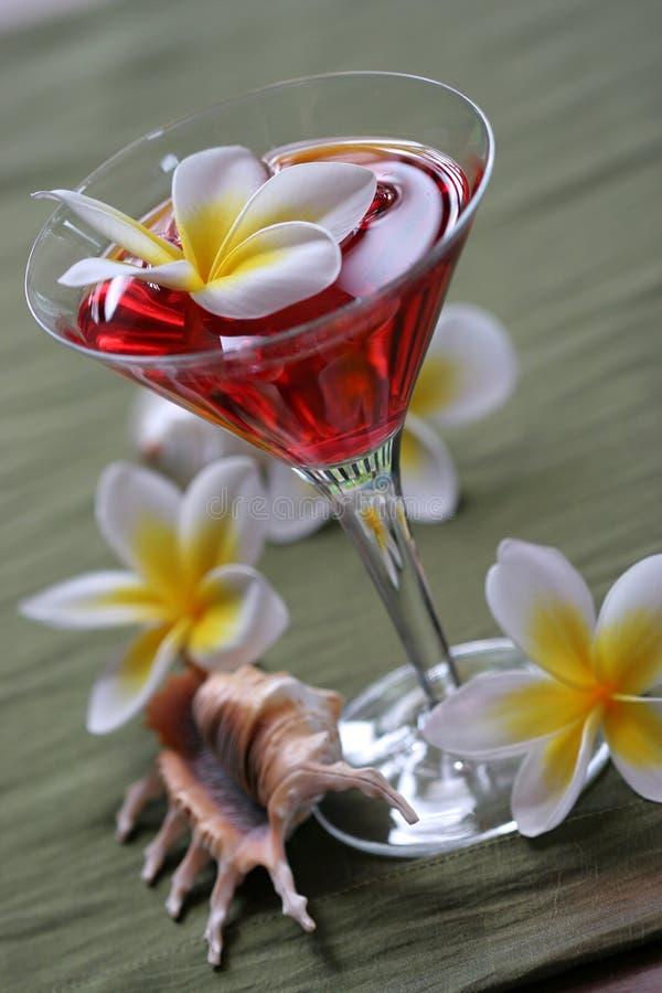 Bebida tropical do perfurador do Plumeria imagens de stock