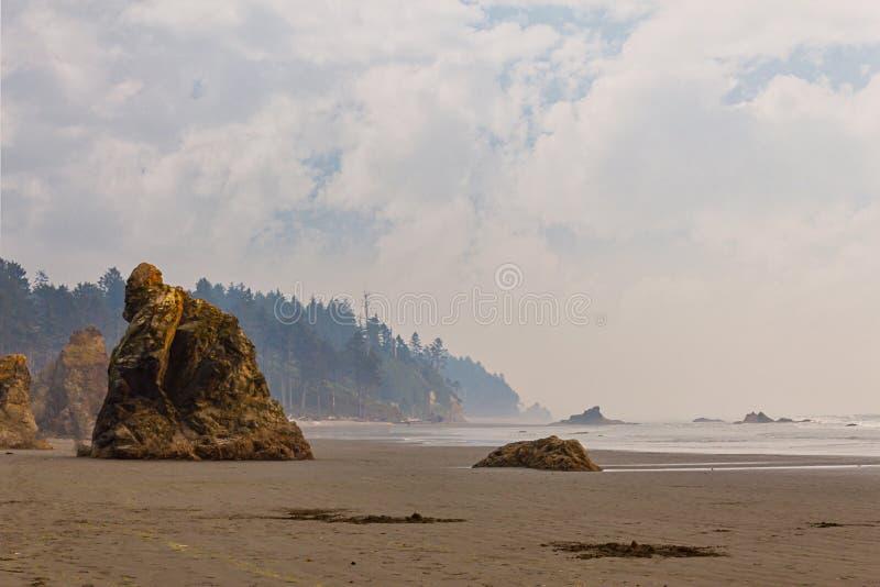 Beboste achtergrond achter nevelige kust en seastacks stock afbeelding