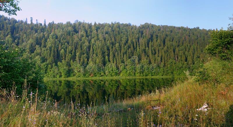 Beboste helling boven de stille rivier in de zomer royalty-vrije stock foto's