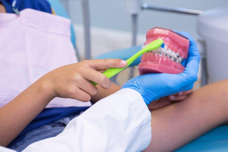 Bebouwd beeld van de jongen van het tandartsonderwijs het borstelen tanden op gebitten stock foto's