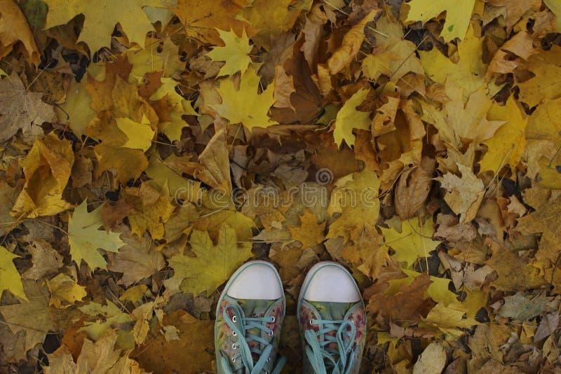 Bebouwd Schot van Blauwe Tennisschoenen over Autumn Background stock foto's