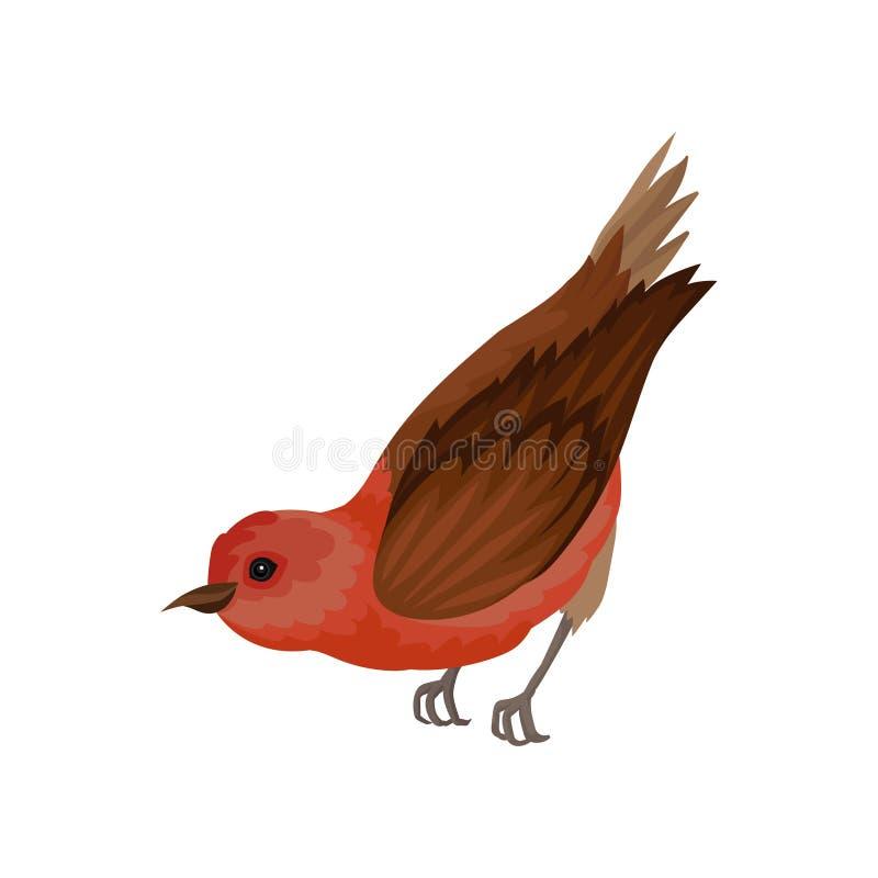 Bec croisé avec le plumage rouge lumineux Petit oiseau d'hiver avec les ailes et le bec bruns Élément plat de vecteur pour le liv illustration de vecteur