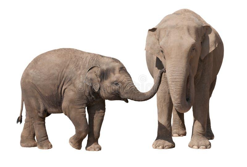 Becerro del elefante con su madre imagen de archivo libre de regalías