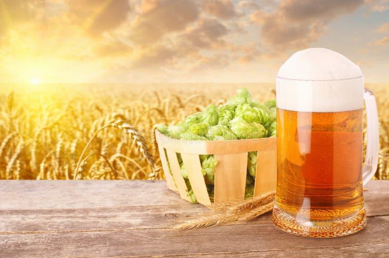 Becher Bier gegen Weizenfeld stockfotos