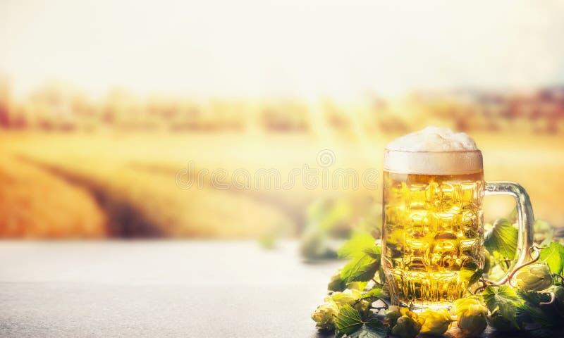 Becher Bier mit Schaum auf Tabelle mit Hopfen am Feldnaturhintergrund mit Sonnenstrahl, Vorderansicht stockfoto