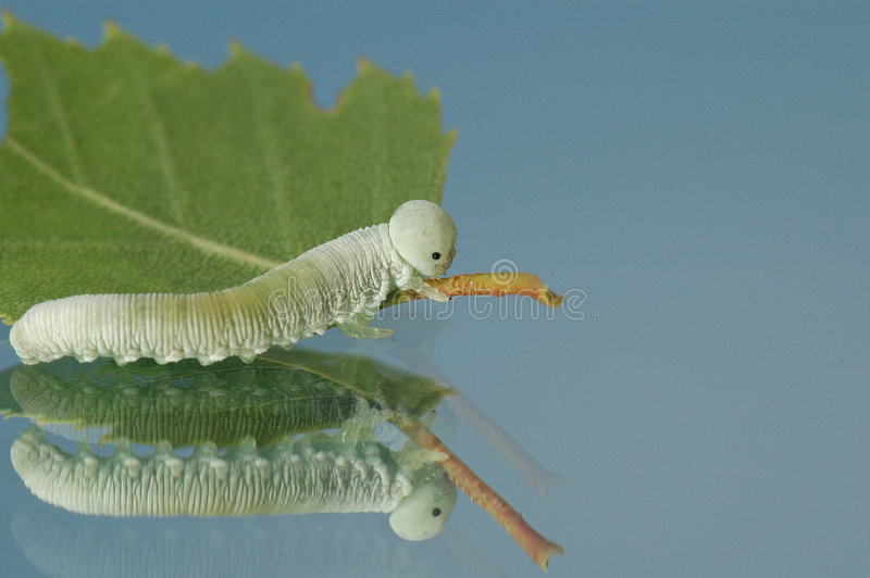 Download Becoming a butterfly stock image. Image of cutworm, antenna - 167309