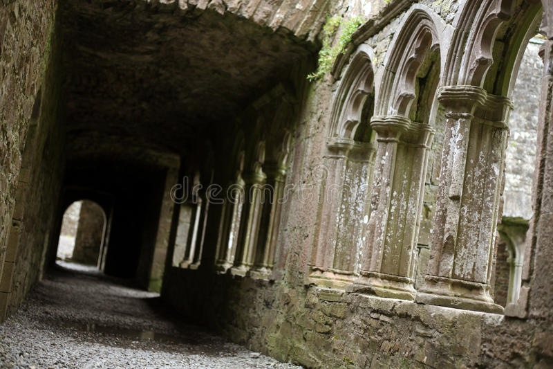 bective abbey royaltyfria bilder