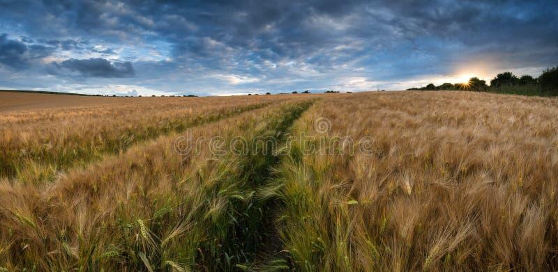 Bedöva bygd landskap vetefältet i sommarsolnedgång royaltyfri fotografi