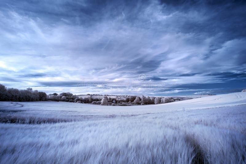 Bedöva det infraröda sommarlandskapet för overklig falsk färg över agri royaltyfri foto