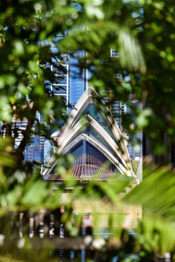 Bedöva detaljsikten av Sydney Opera House och dess arkitektoniska särdrag sedda igenom suddiga buskar royaltyfri bild