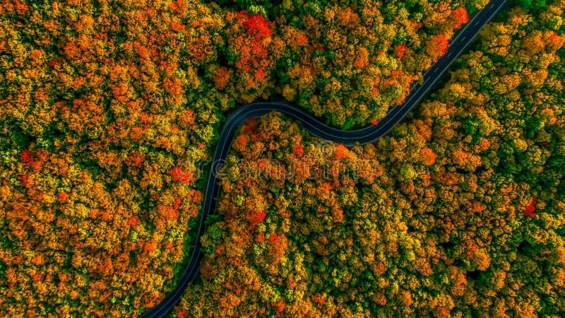 Bedöva flyg- sikt av vägen med kurvor som korsar tät skog I arkivbilder