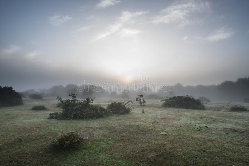 Bedöva gryningsoluppgånglandskap i dimmig ny skogbygd arkivfoto
