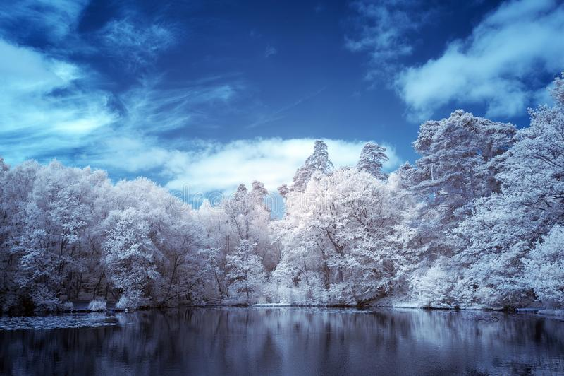 Bedöva infrarött sommarlandskap för overklig falsk färg av på engelska bygd för sjö och för skogsmark arkivbilder