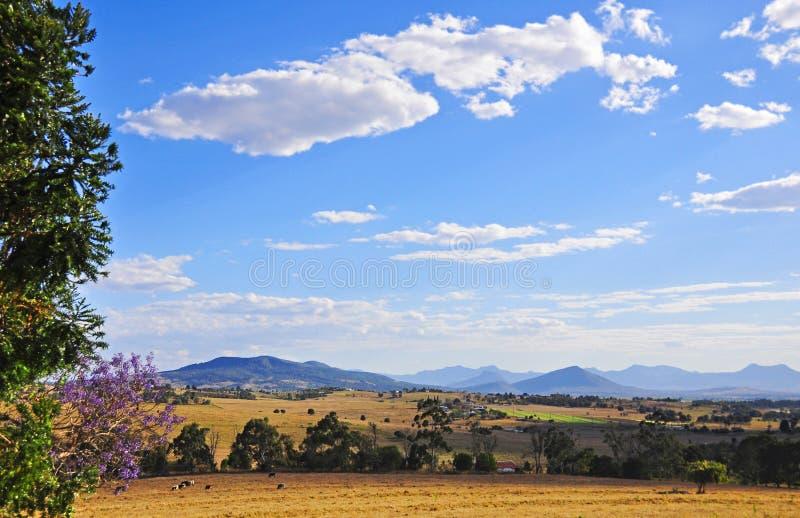 Bedöva landskapnötkreatur som betar fält, lantgårdar, blå himmel, bergskedja royaltyfria foton