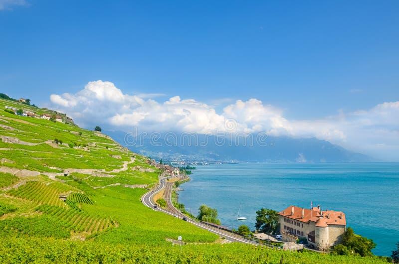 Bedöva sikt av Genève sjön, Schweiz med härliga terrasserade vingårdar på lutningar vid sjön Schweizisk gummilacka Leman är popul royaltyfri bild
