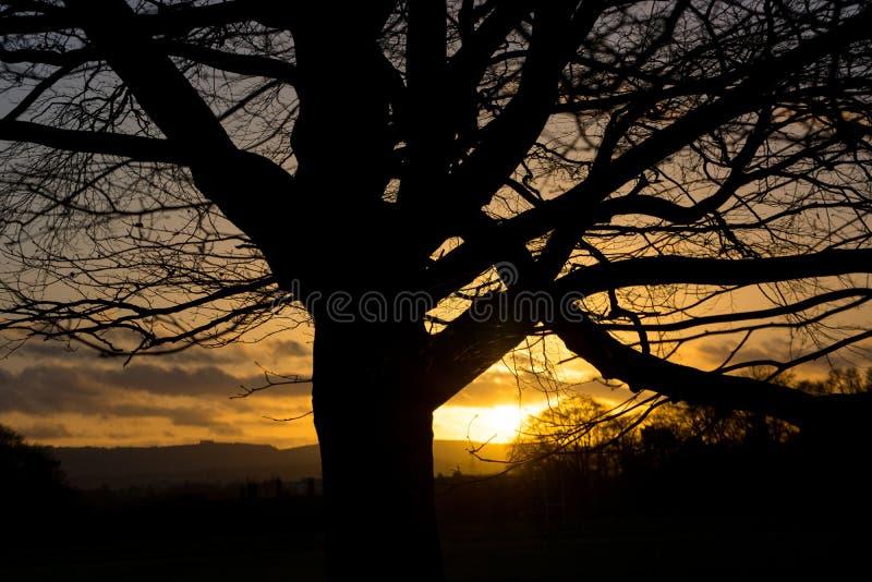 Bedöva solnedgång i Irland, träd med kala filialer i vinter silhouetted mot orange himmel royaltyfri foto