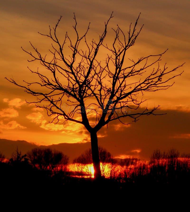 Bedöva solnedgång med det ensamma trädet arkivfoton