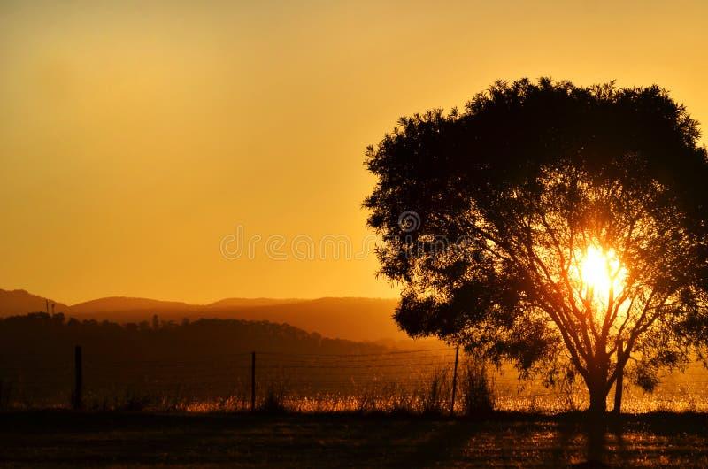 Bedöva solnedgångsolinställningen bak träd, berg lantliga Australien royaltyfri foto