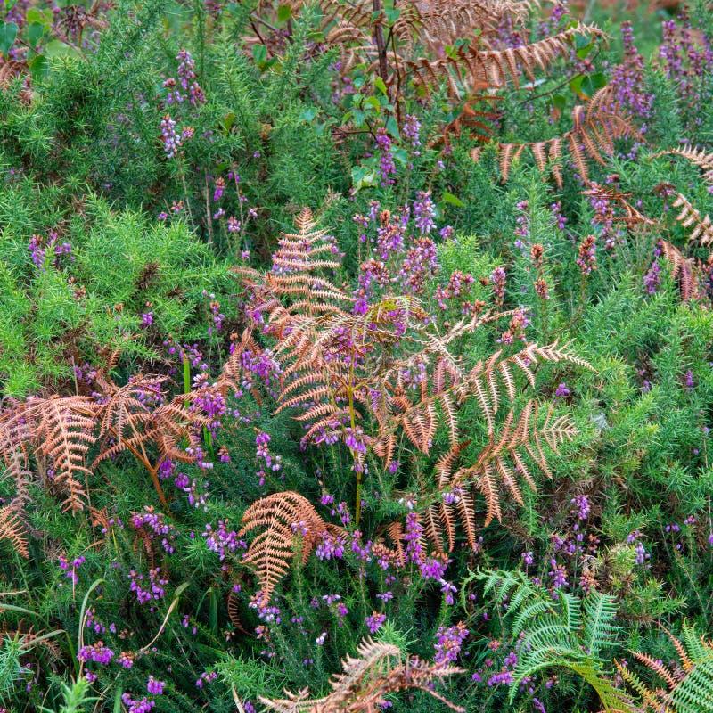 BEDÖVA VIBRERANDE intim landskapbild av lövverk och växter arkivbilder