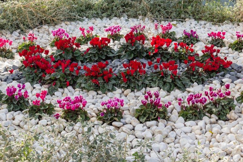 bed blommablommor arkivfoto