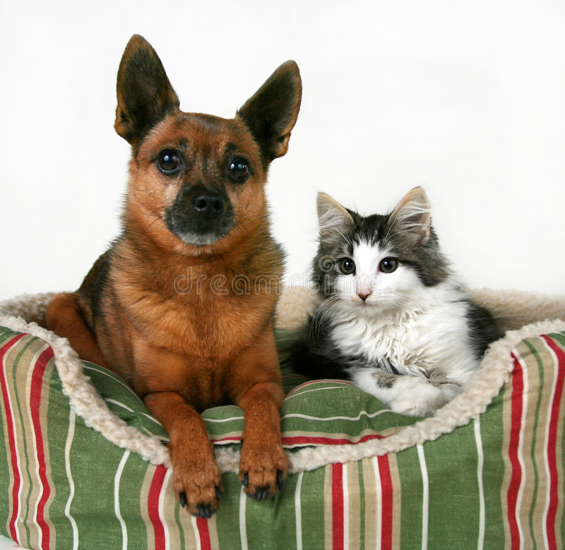Bed Buddies Royalty Free Stock Photo