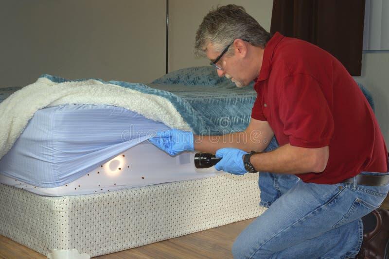 Bed bug-besmettingsdienst man die geïnfecteerde matrasbladen en deken bedding inspecteert royalty-vrije stock foto's