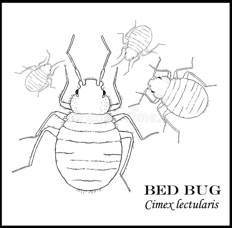 Download Bed Bug Illustrated Poster Royalty Free Stock Photo - Image: 17370205