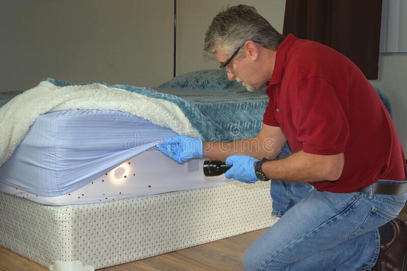 Bed bug infestation extermination service man inspecting infected mattress sheets and blanket bedding royalty free stock photos