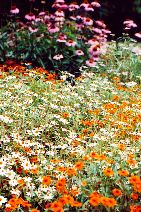 Download Bed of Flowers 2 stock photo. Image of wild, fine, brown - 51438